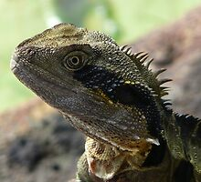 Portrait - Male Water Dragon by stevealder