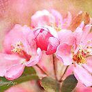 Crabapple Blossoms by Chris Armytage™
