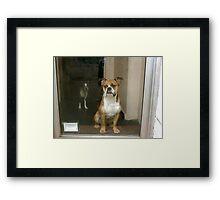 Greenwich Village Dogs Framed Print