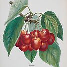 FGG Cherries #1 by sjames