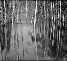 'Flooded Trees: Two Forests.' Pakse, Laos by RyanEdwardson
