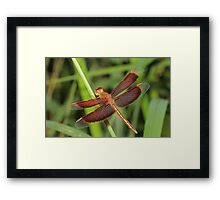 Red and Bronze Dragonfly Framed Print