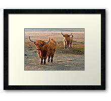 Beautiful Highlanders Framed Print