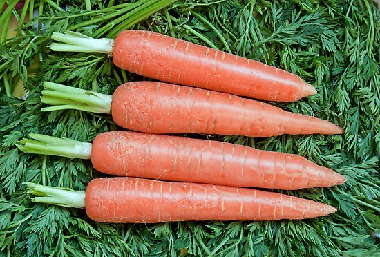 Fresh ripe raw carrot  by IKGM