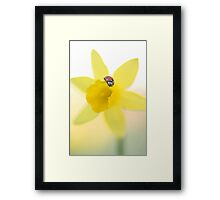 Soaking up the sunshine Framed Print