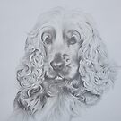 Cocker spaniel by Peter Lawton