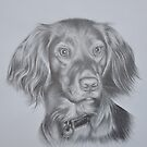 cocker spaniel no 2 by Peter Lawton