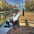 The Manchester Terrier..Small Dog,Big City. by VoluntaryRanger