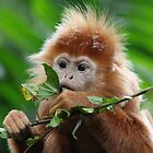 Monkey at Singapore Zoo by Chris Cherry