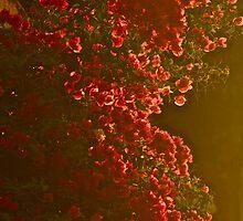 Sunrise   burning -  Bougainvillea . Nature Wonders  Crete Greece  by Brown Sugar . Views (432) . Thanks ! by © Andrzej Goszcz,M.D. Ph.D