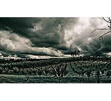 Vineyard Drama Photographic Print