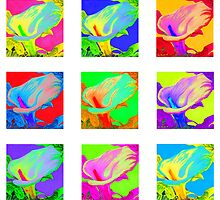 Nine colorful Calla Lilies by Kim Bender