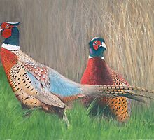 Pheasants by Marlene Piccolin