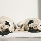 Let Sleeping Pugs Lie by 1773