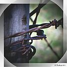 Don't Fence Me In - Barbed wire on corner post by Betty Northcutt