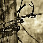 Don&#x27;t Fence Me In 2 - Barbed wire on post in sepia by Betty Northcutt