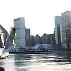Seagull over East River, Manhattan by tomduggan