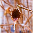 Frozen Leaf by Carrie Bonham
