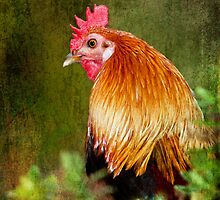 Fancy Fowl by Barb Leopold