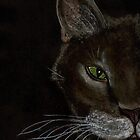 Grey Cat by Dawn B Davies-McIninch