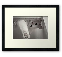 How Many Cats Does It Take to Screw in a Light Bulb?' Framed Print