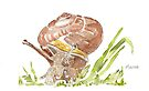 A Snail in my garden by Maree Clarkson