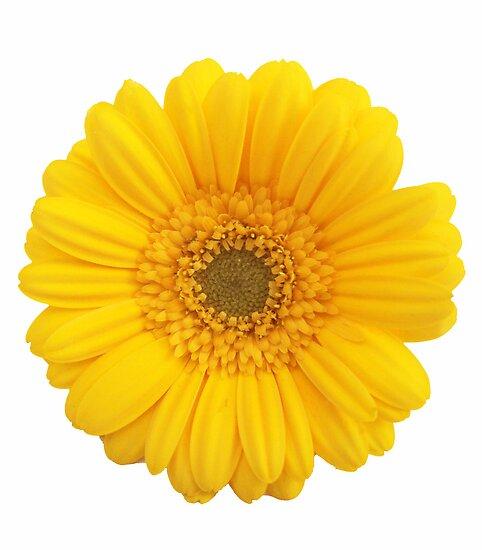 Yellow Gerber Daisy Clip Art