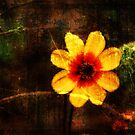 Beauty of Nature Shines by Terrie Taylor