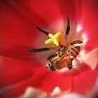 Red Tulip with Bee  by venny