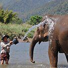 Elephant River Bath by ApeArt