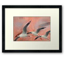Wings Float © Vicki Ferrari Photography Framed Print
