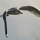 Seagull's Flight by RockyWalley