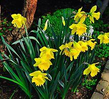 Just Love Daffodils by Richard  Leon