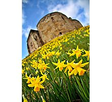 Early Daffodils In York Photographic Print