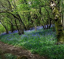 Bluebell Wood by jonshort58
