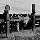 Groynes at Happisburgh Coast by Emily Clarke