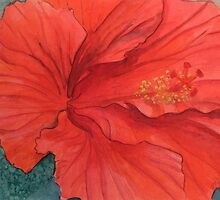 HIBISCUS by PierceClark