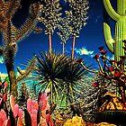 Desertgarden. by alaskaman53