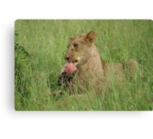 Enjoying those ribs! - Kruger National Park Canvas Print