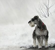 Big Snow by Kay Kempton Raade