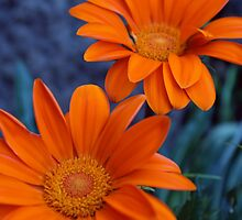 Orange Flowers by Greg Toole