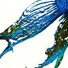 Fish  by BingBangVision