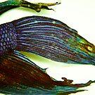 Dead Fish by BingBangVision