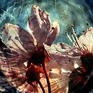 blossoms by karolina