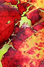 Autumn Vine by yolanda
