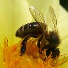 Bee on yellow Dahlia  by Bev Pascoe