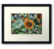 A Touch of the Sun Framed Print