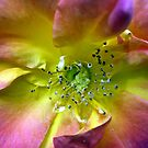 Pistachio hued flower by 2Feathers