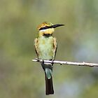 rainbow bee eater by robinmaher