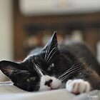 [Pure love] Snoozing cat by AuroraPhoto